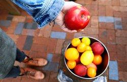 Person holding apple fruit - Andrea P Coan