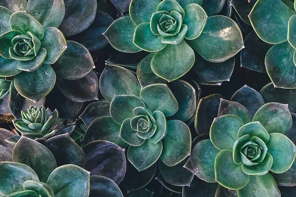 plants_unsplash_AnnieSpratt.jpg